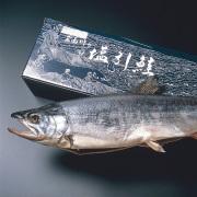 塩引鮭一尾物 4kg前半